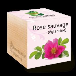 Éco-cube plante à pousser : rose sauvage