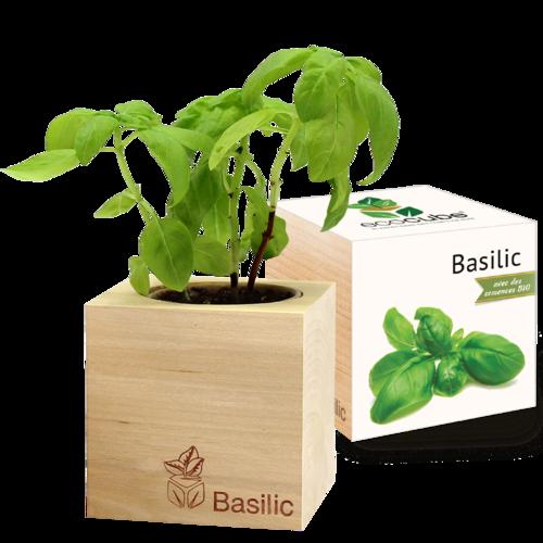 Plante à pousser : Basilic-Bio - Éco-cube